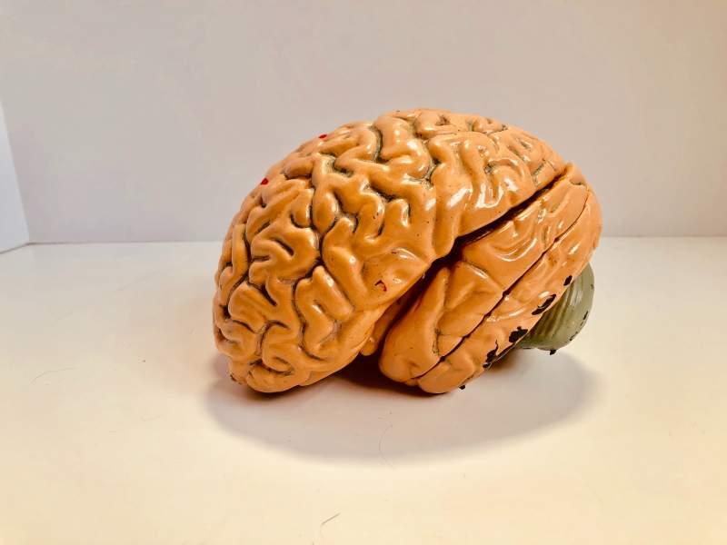 health benefits language learning bigger brain