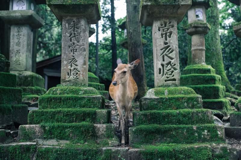 Japanese pronunciation-Japanese vowels