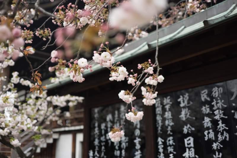 Japanese pronunciation-particle ha
